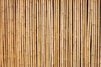 bambus als sichtschutz vor und nachteile. Black Bedroom Furniture Sets. Home Design Ideas