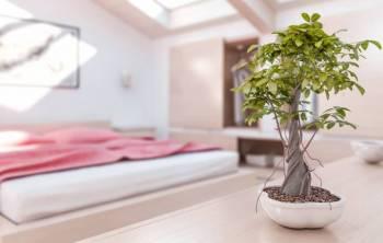 8 feng shui tipps für das schlafzimmer | zuhause.net - Feng Shui Schlafzimmer 8 Tipps