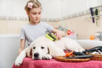 In schritten hundehaare entfernen zuhause