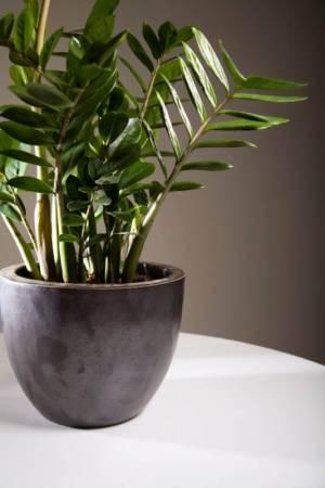 Zimmerpflanzen ideale pflanzen bei wenig licht - Zimmerpflanzen ohne licht ...
