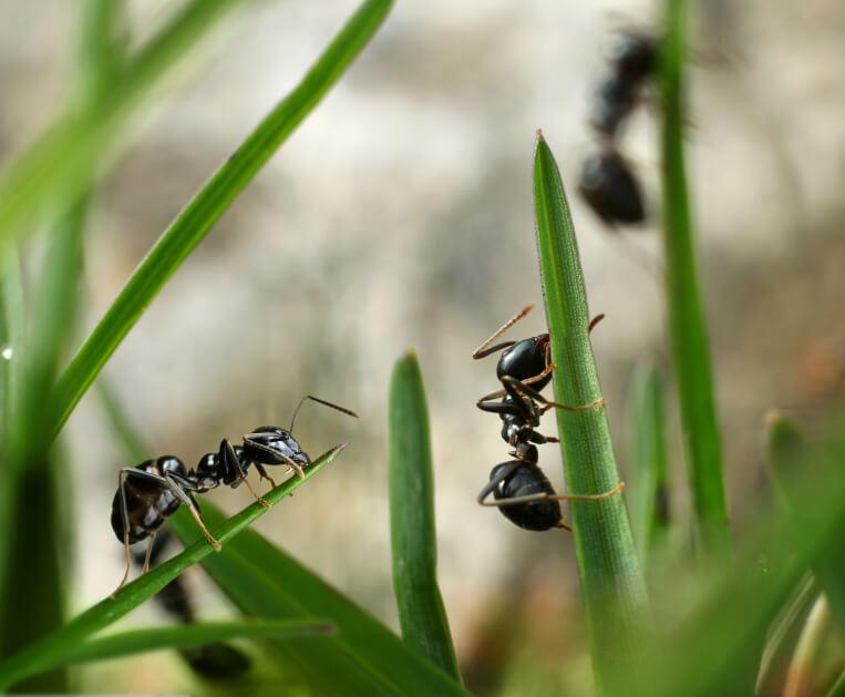 Was Tun Gegen Ameisen Im Haus : was tun gegen ameisen im haus oder garten ~ Watch28wear.com Haus und Dekorationen