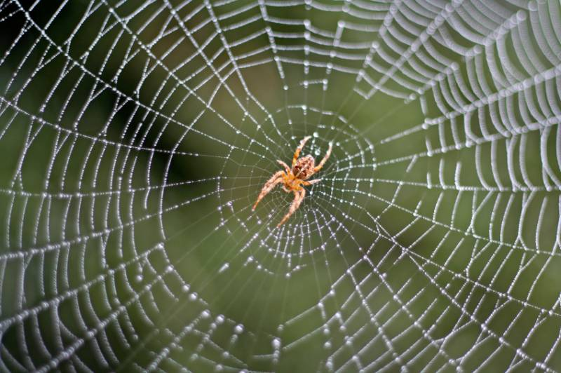 Gefährliche Spinnen In Deutschland