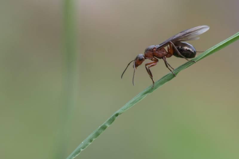 hilfe: fliegende ameisen im haus | zuhause
